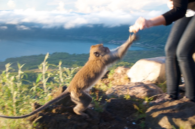 heather feeding monkey mt batur