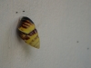 snail villa kembali