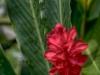 flower villa kembali